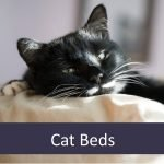 Best Cat Beds for Elderly Pets