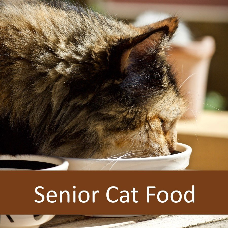 Does Your Senior Cat Need Senior Cat Food