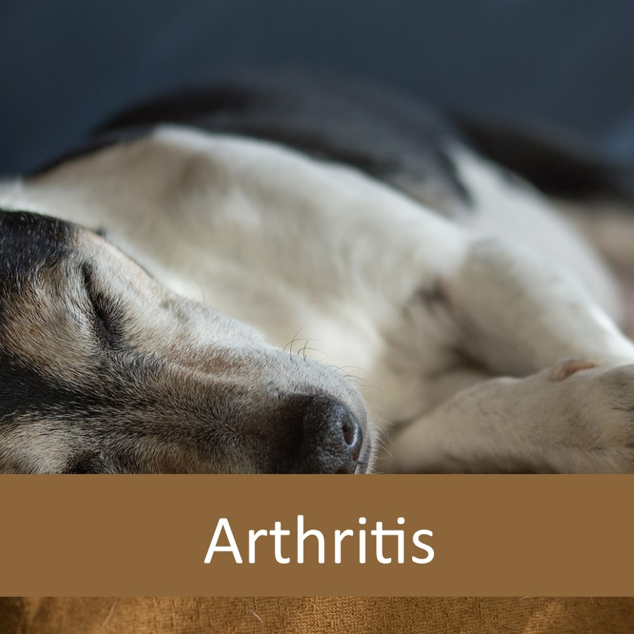 How to Help Senior Pets with Arthritis