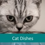 Best Pet Feeding Dish for Senior Cats