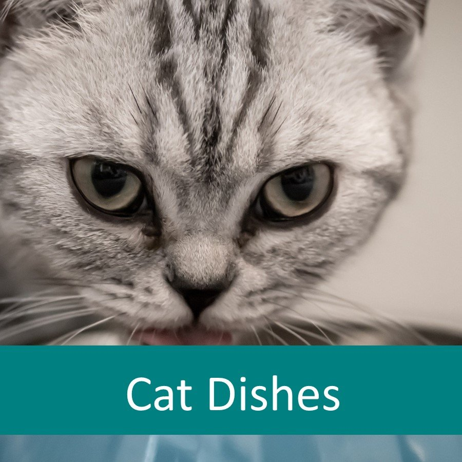 Which food bowl is best for older cats?