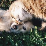 Pet Insurance Facts for Senior Pets
