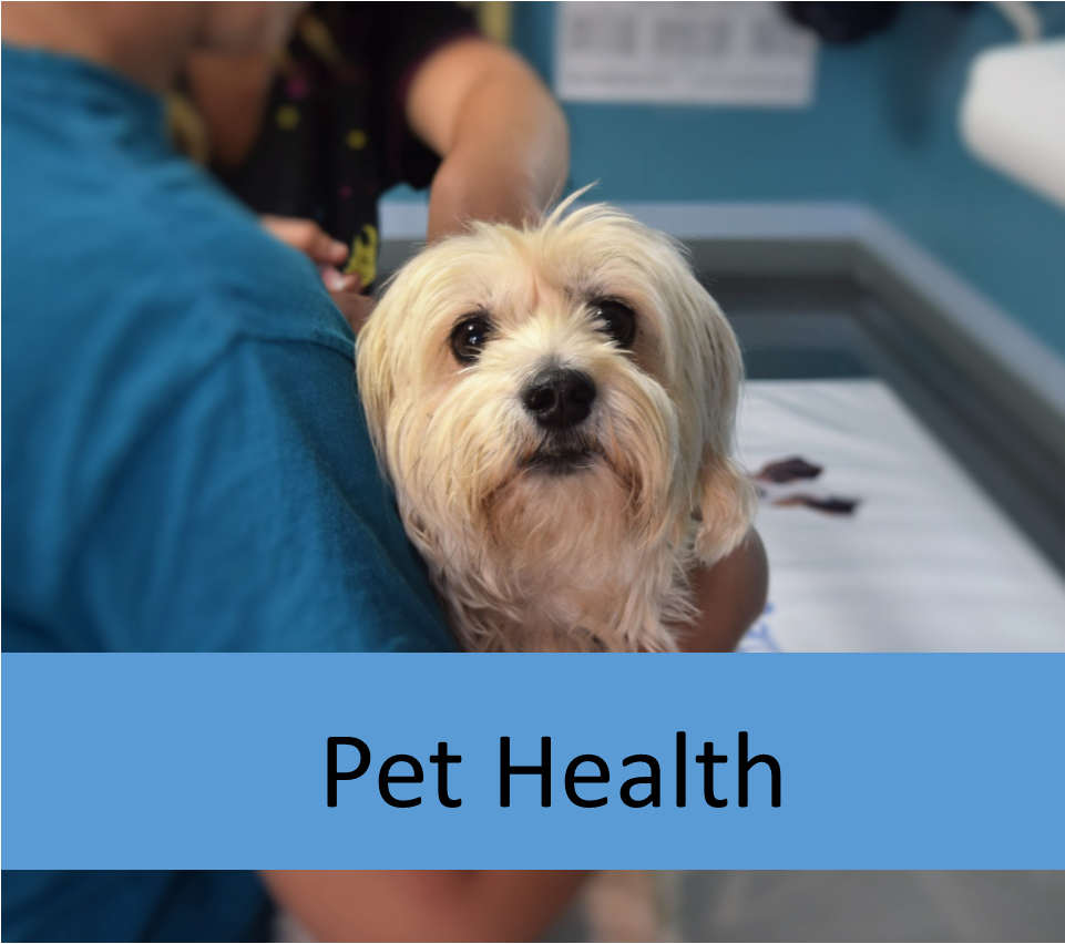 pet health for elderly pets