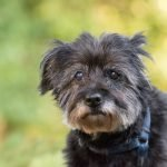 To Parents of Elderly Pets: You are Not Alone