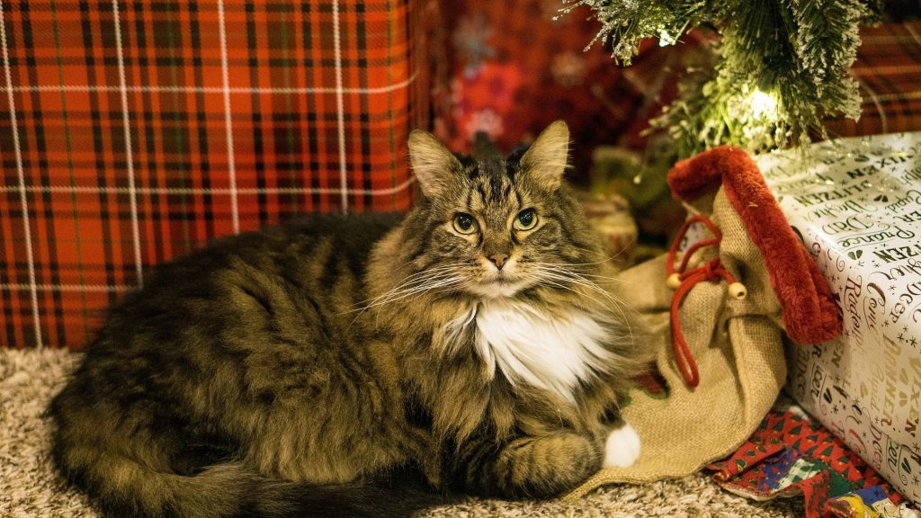 Celebrating Holidays with Elderly Pets