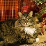 Celebrating Holidays with Elderly Pets