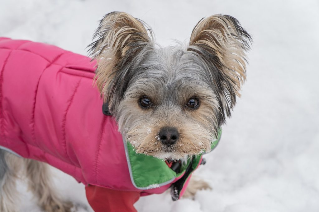 Elderly Pet Safety in Cold Weather
