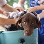 Bathing Elderly Pets