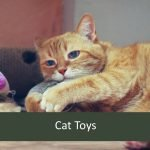 Best Cat Toys for Elderly Pets