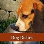 Best Pet Feeding Dish for Elderly Dogs