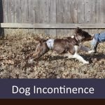 Best Dog Incontinence Products