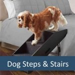Best Steps and Stairs For Elderly Pets
