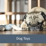 Best Dog Toys for Elderly Pets