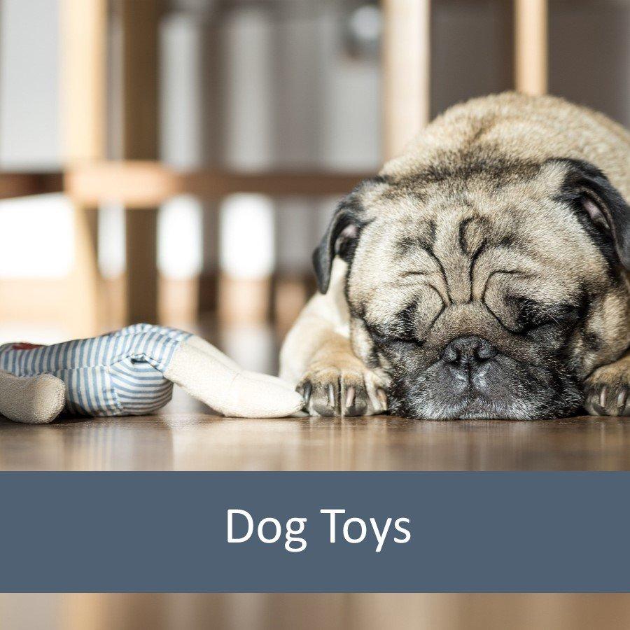 Best Dog Toys for Elderly Pets