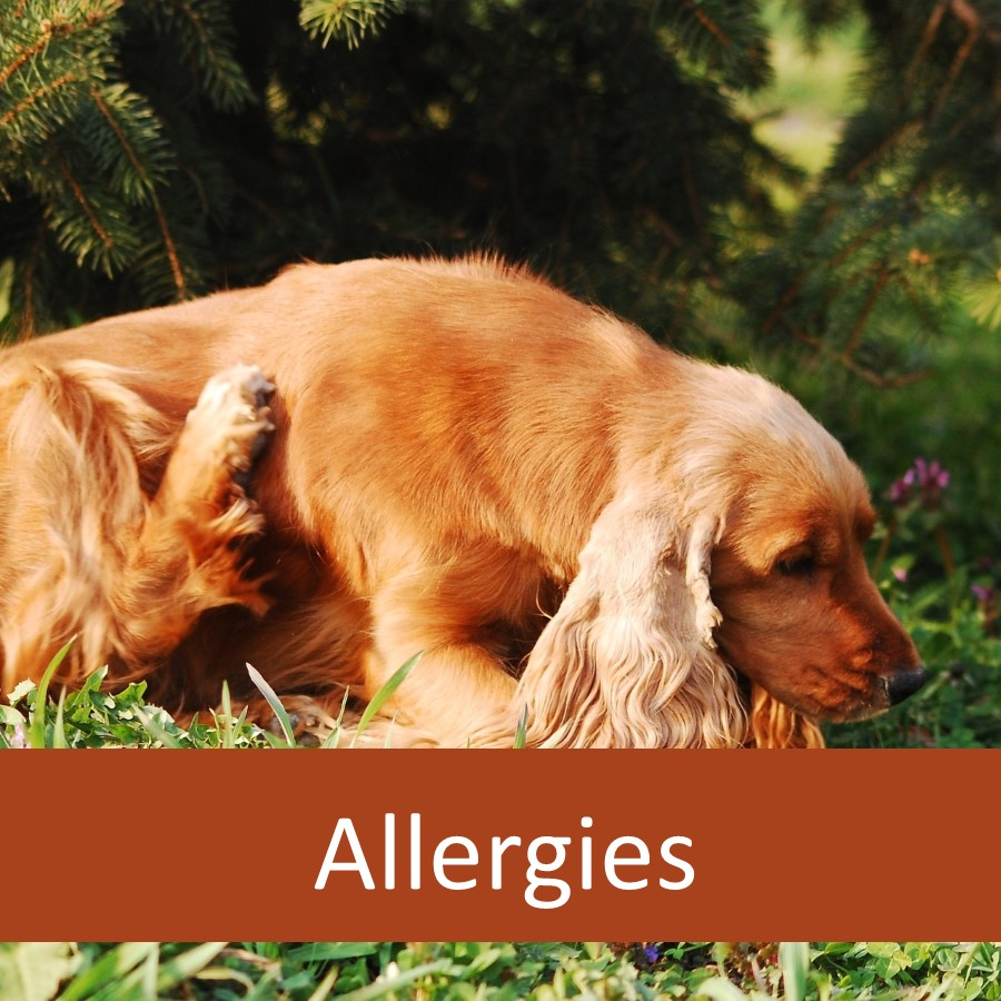 Help for Senior Pets with Allergies