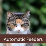 Best Automatic Feeders for Senior Cats