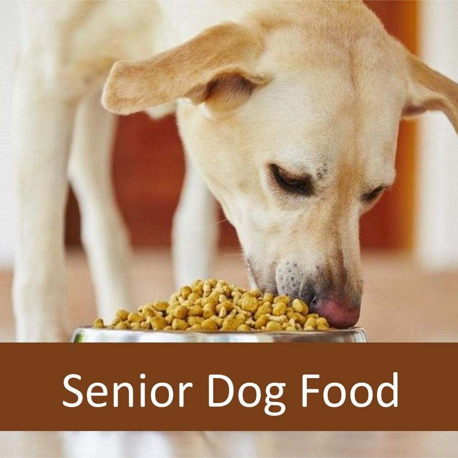 Does Your Senior Dog Need Senior Dog Food
