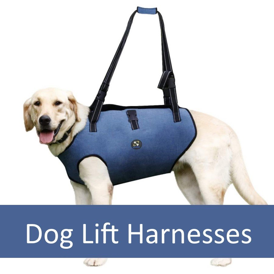 How a Lift Harness Can Help Older Dogs