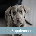 Best Joint Supplements for Senior Dogs