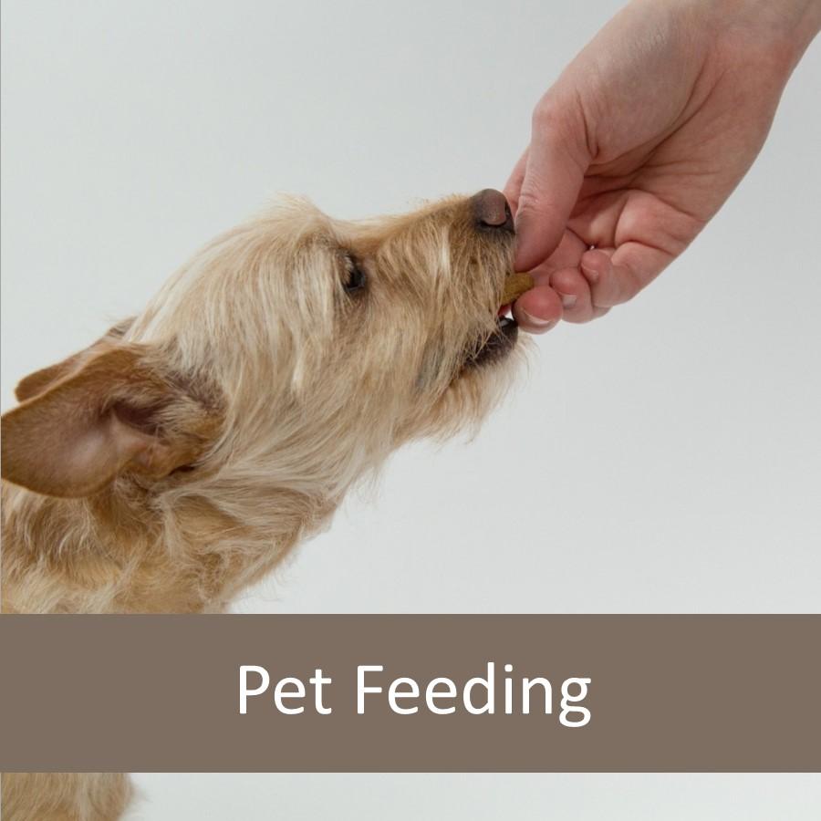 Top Ten Foods You Should Not Feed Your Senior Pet