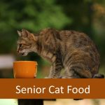 Best Dry Senior Cat Food