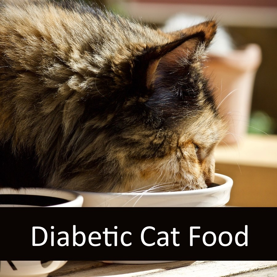 Is Raw Food Appropriate for a Diabetic Cat