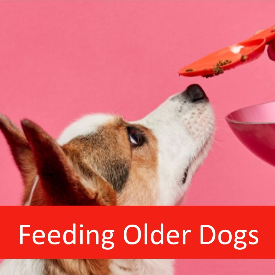 Can Dog Food Help Target Specific Health Conditions