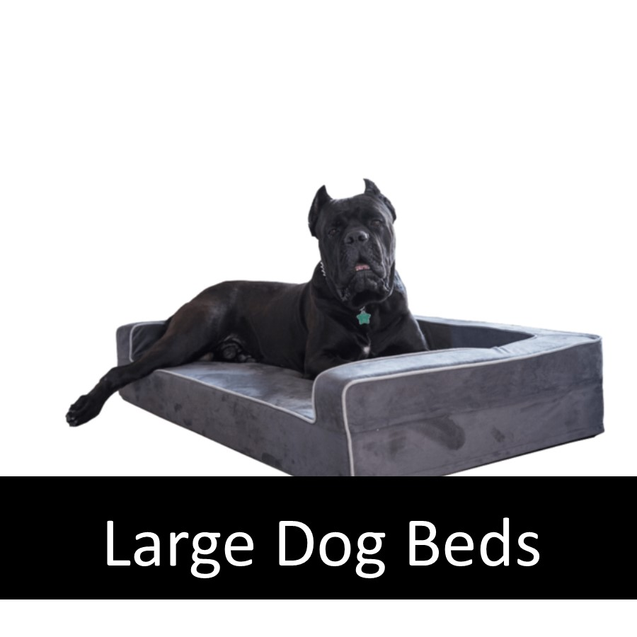 Do Large Breed Older Dogs Need Orthopedic Pet Beds?