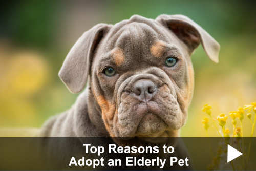 Top Reasons to Adopt a Senior Pet
