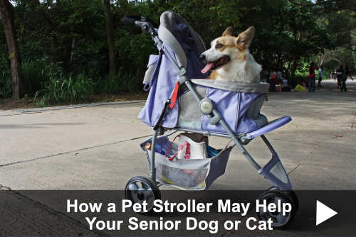 How a Pet Stroller May Help Your Senior Dog or Cat