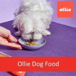 Ollie Pets Inc. - Dog Food