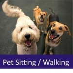 Top 5 Reasons to Hire a Pet Sitter or Dog Walker for your Senior Pet