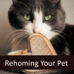 Rehoming Your Senior Pet