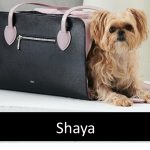 Shaya - Luxury Carriers, Collars, Leashes, Cleanup Purses