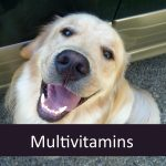 Which Multivitamins do Senior Pets Need?