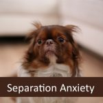 Senior Pet Separation Anxiety & Returning to the Office