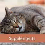 Do Senior Cats Need Supplements?