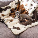 Top 5 Reasons a Senior Pet May Need a Waterproof Blanket