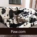 Paw.com
